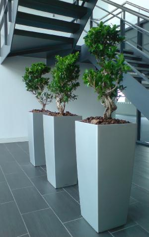 Overview plantscape specialists in interior plant display - Interior plant maintenance contract ...