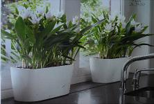Plantscape interior services specialists in office plant - Interior plant maintenance contract ...